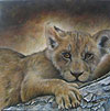 Curious Cub painted by Wendy Palmer.<br>