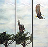 Taking Flight painted by Wendy Palmer.<br>