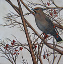 Bohemian Waxwing painted by Wendy Palmer.<br>