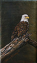 The Eagle Perch painted by Wendy Palmer.<br>
