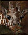 Giraffe painted by Wendy Palmer.<br>